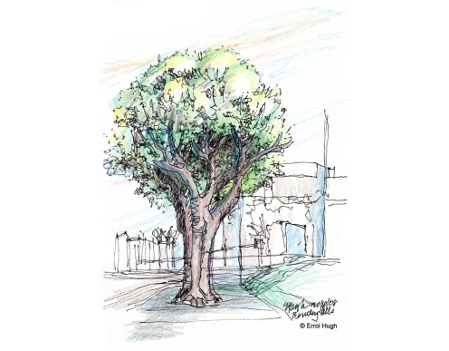 beverly-hills-trees-4