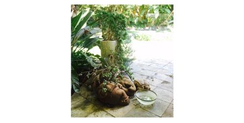 harlan-garden-2